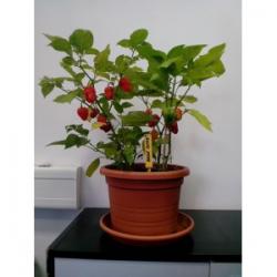 """Bílý """"balkánský sýr"""" z kravského mléka."""